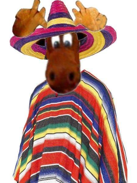 00 09-29-12 Moose in Sombrero.JPG