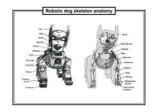 20111129234433-dog_skeleton_08.