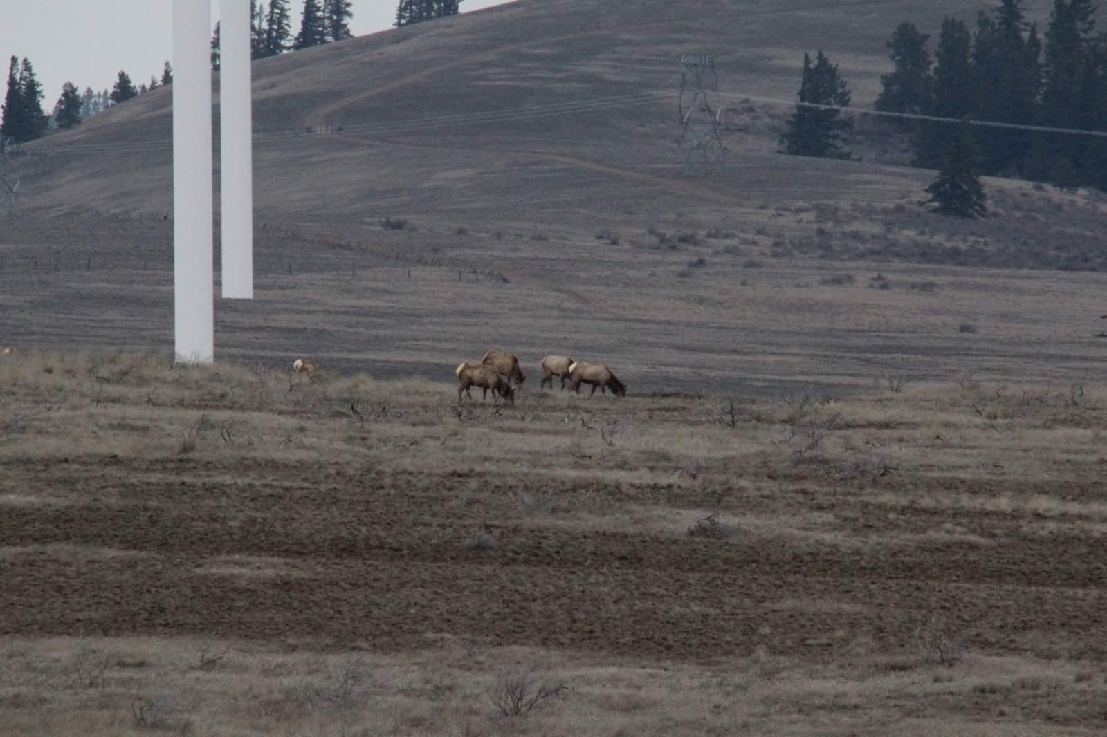 20150302 Elk (6).