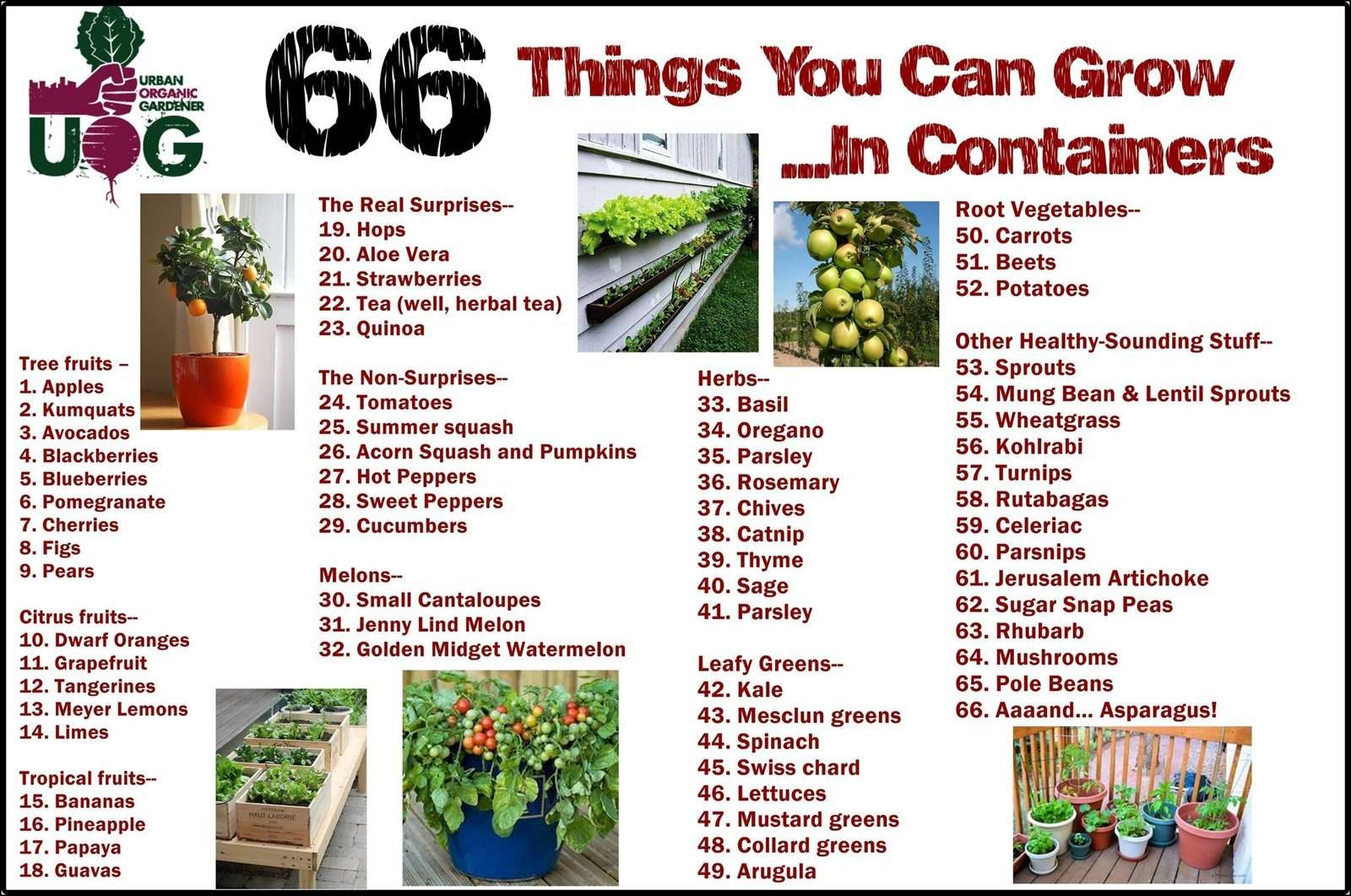 66-Things-You-Can-Grow-In-Containers.