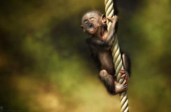 a.aaa-Cute-Monkey.