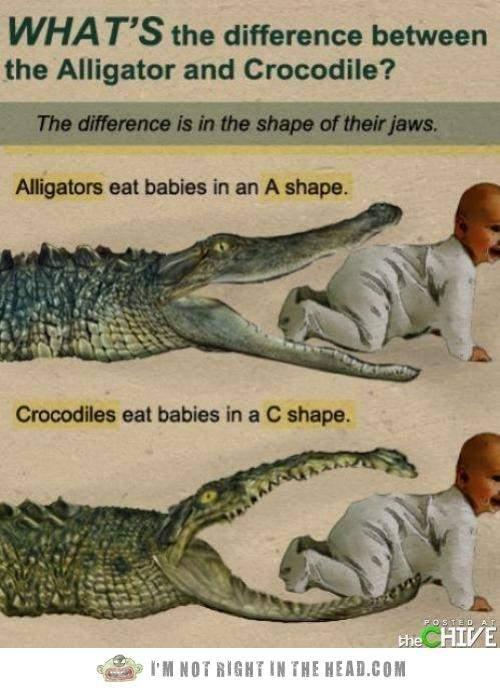 ALLIGATOR-VS-Crocodile.