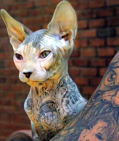 Amazing Tattooed Sphynx Cats  14.
