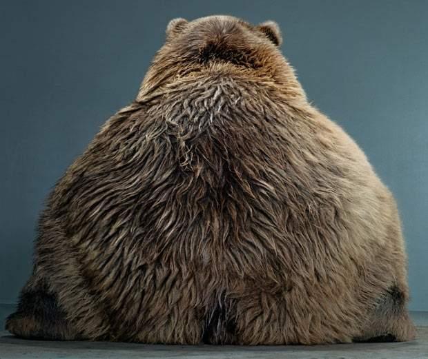 bear ass.