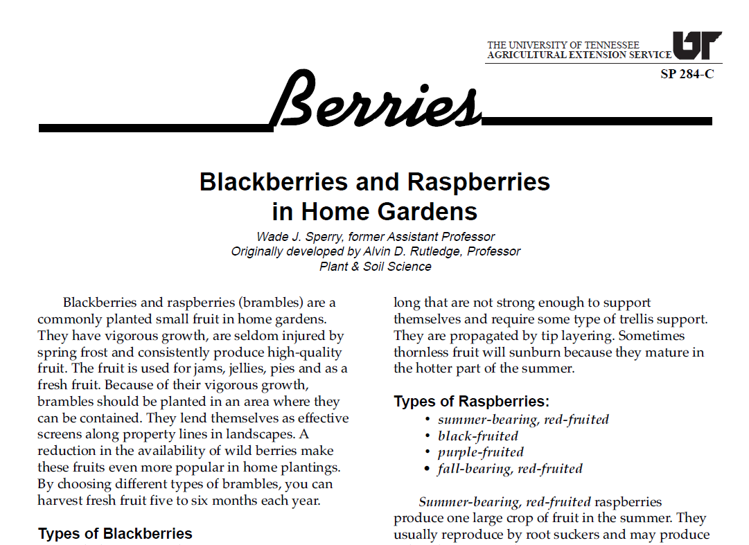 berries_4BN.