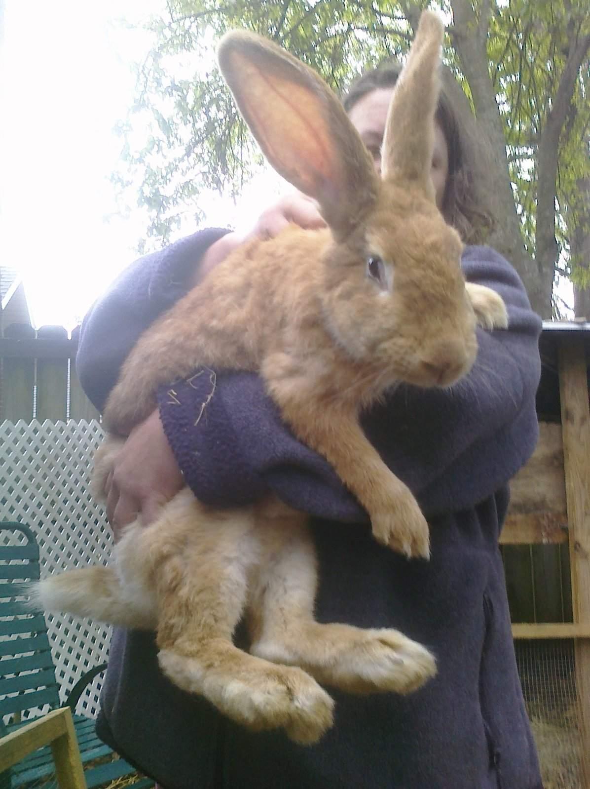 Big Rabbit.