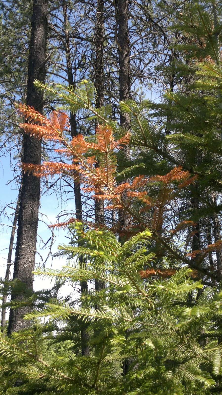Brown limb on tree.