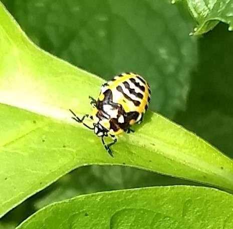 bug close up.