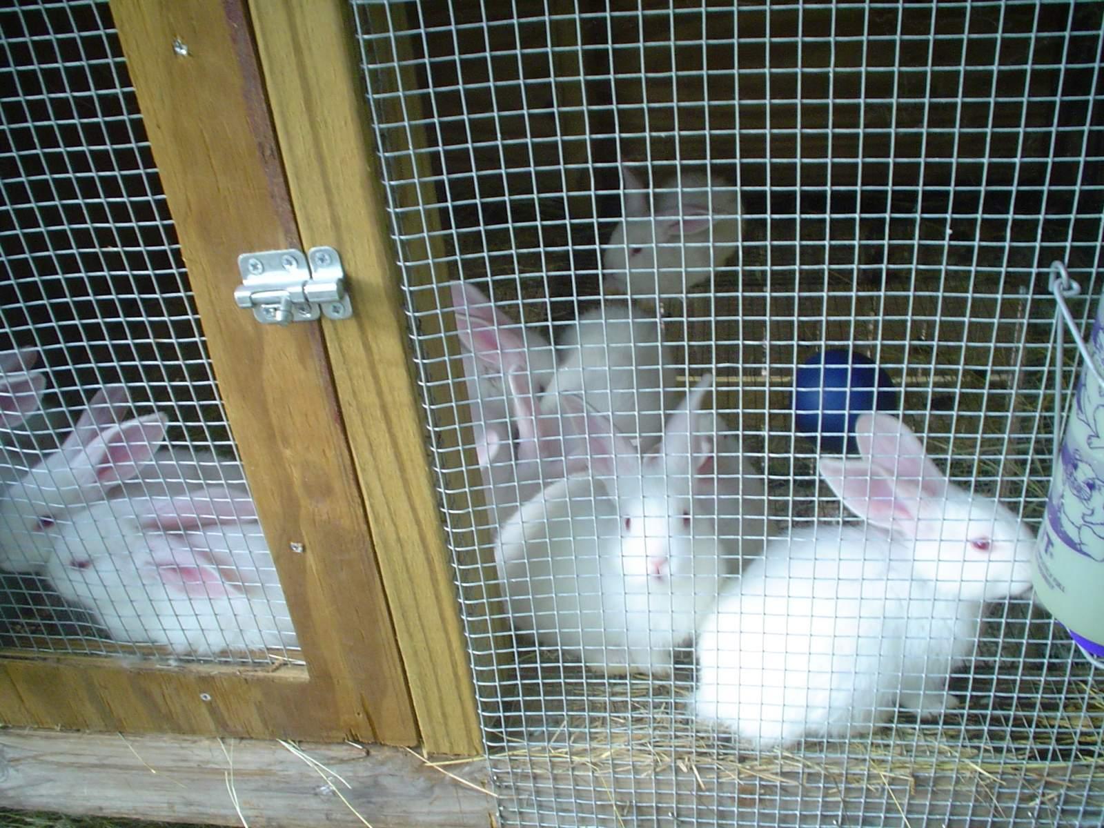 bunnies 003.