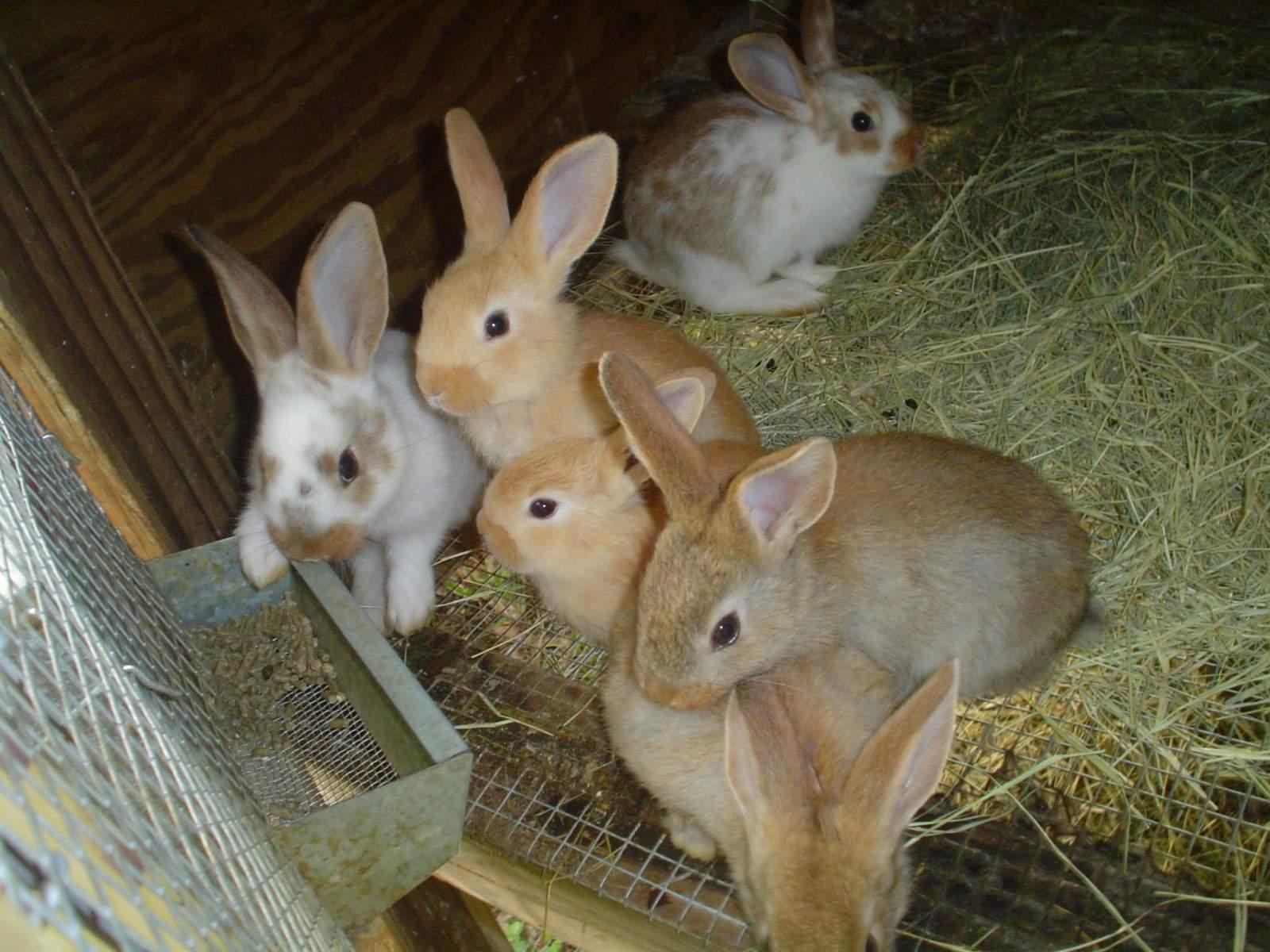bunnies 004.