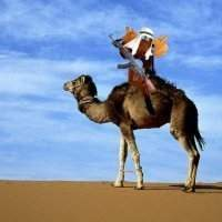 Camel moose.