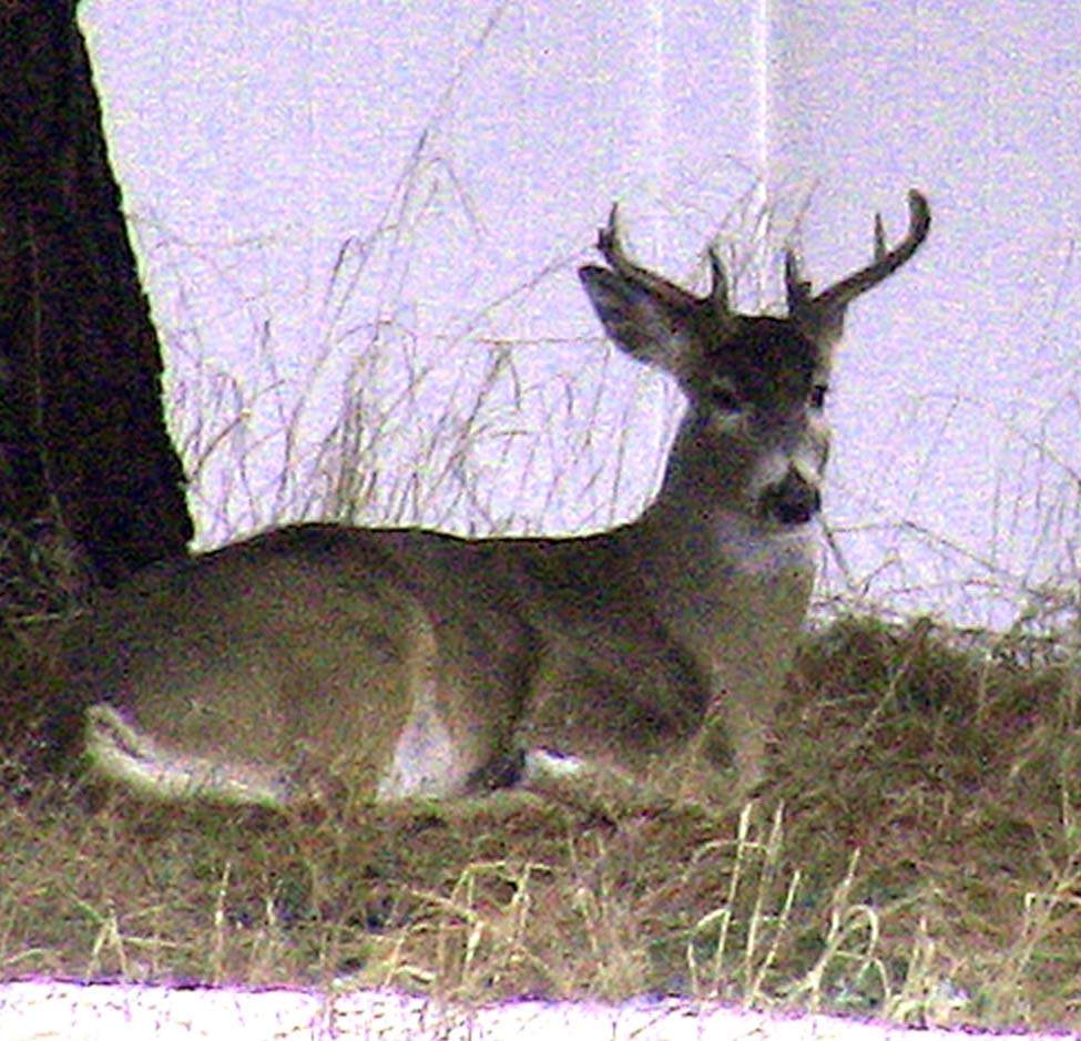 Clyde's buck_0861.