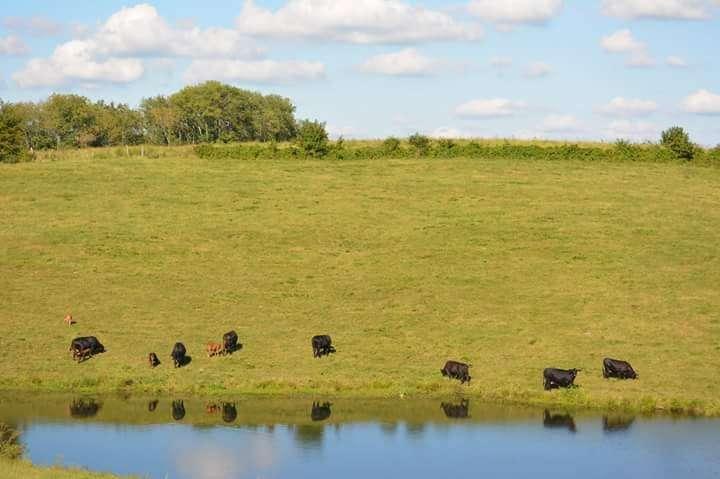 Cows Pond.