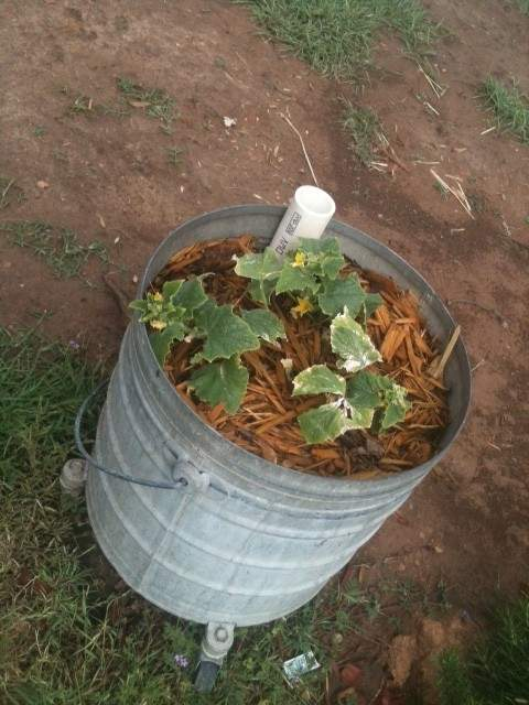 cucumberbucket-e1335717653475.