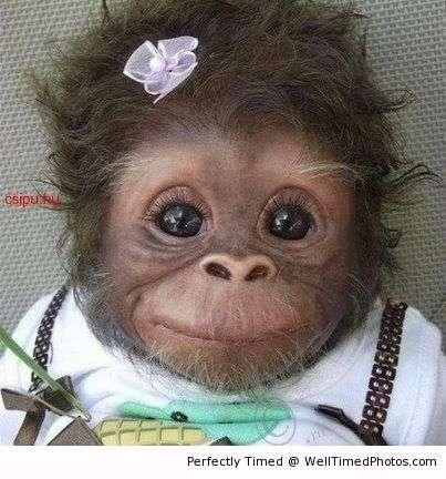 cute-baby-monkey-resizecrop--.