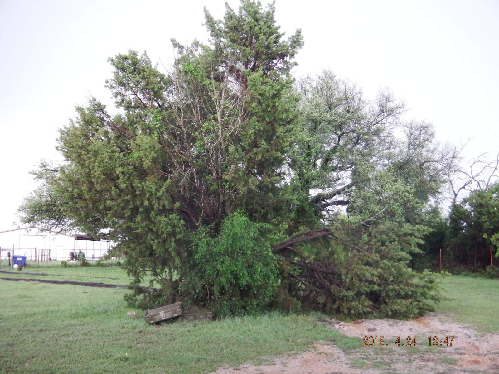Damaged Tree from storm 4-23-2015.JPG