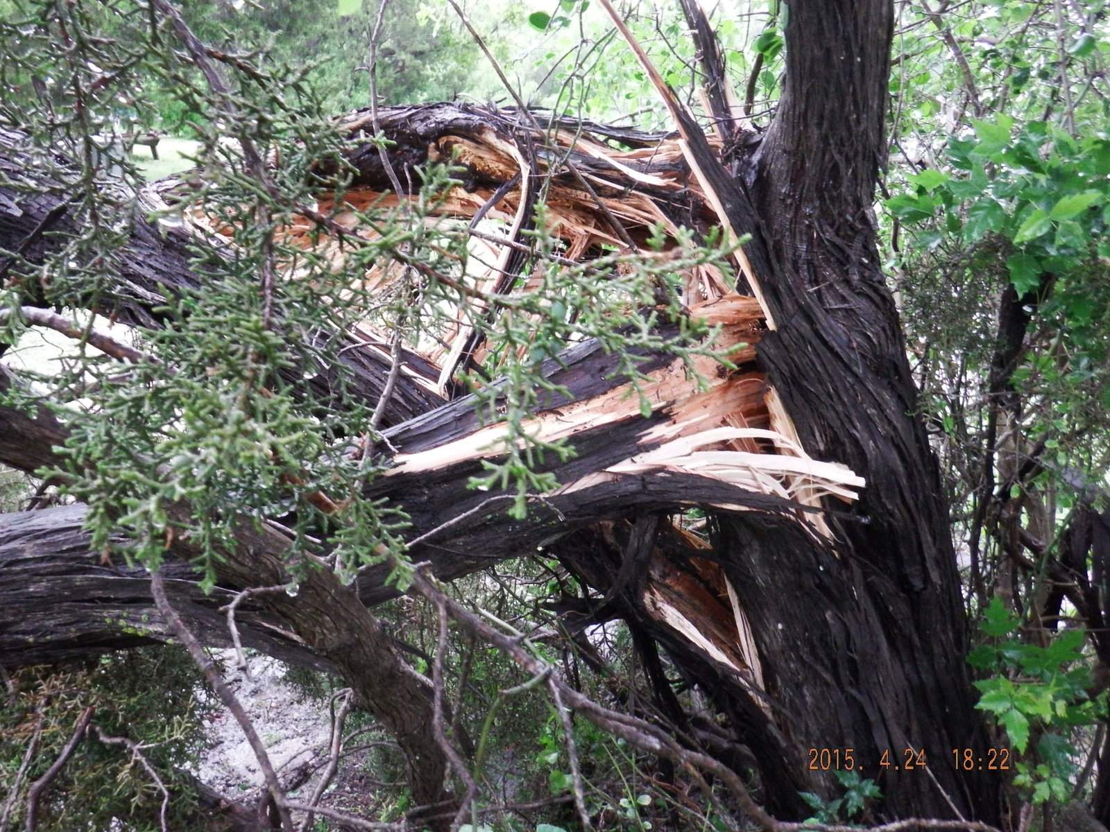 Downed Tree Storm Damage from 4-23-2015.JPG