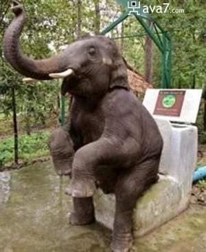 elephant-toilet.