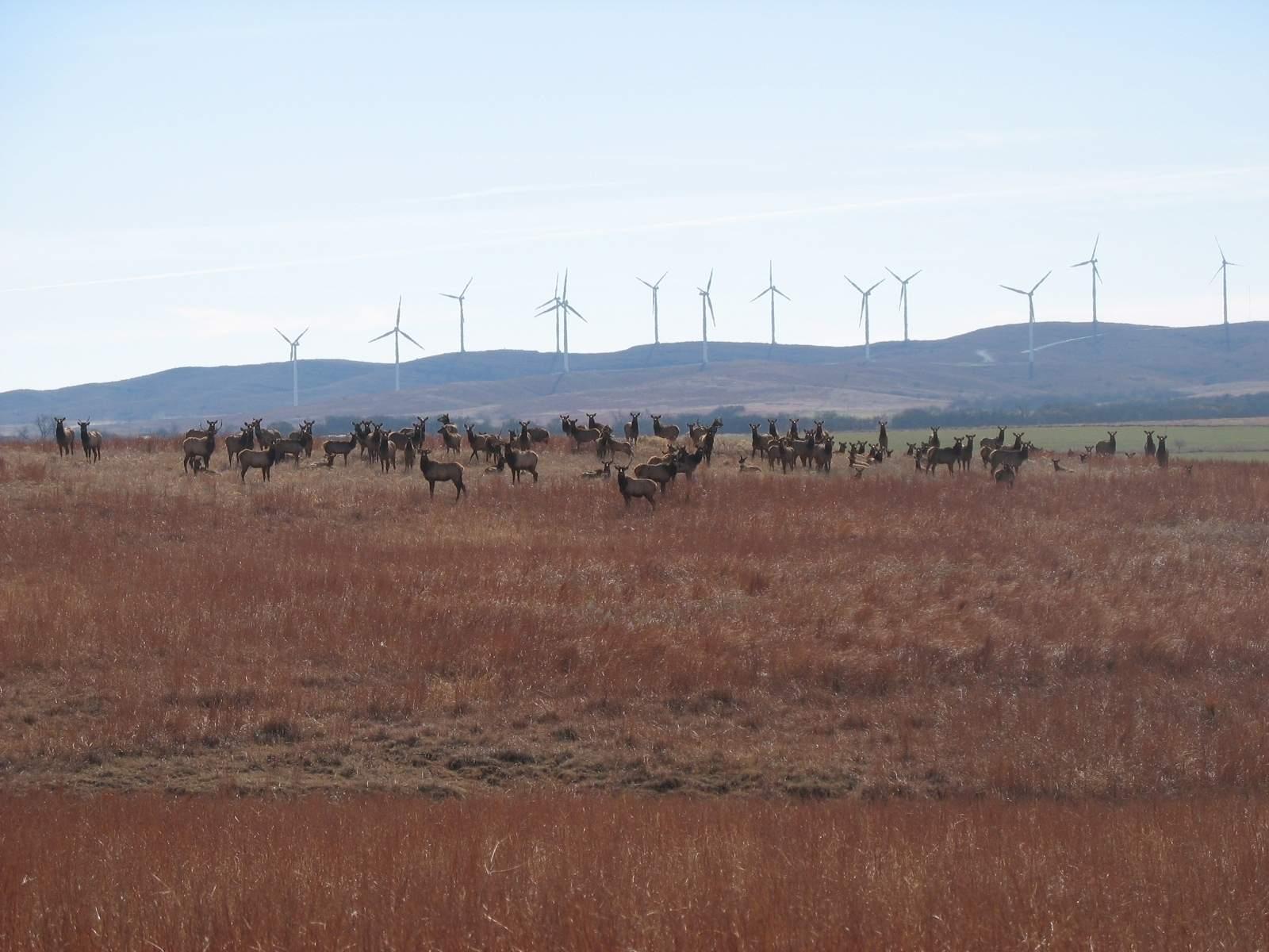 elk at site.JPG