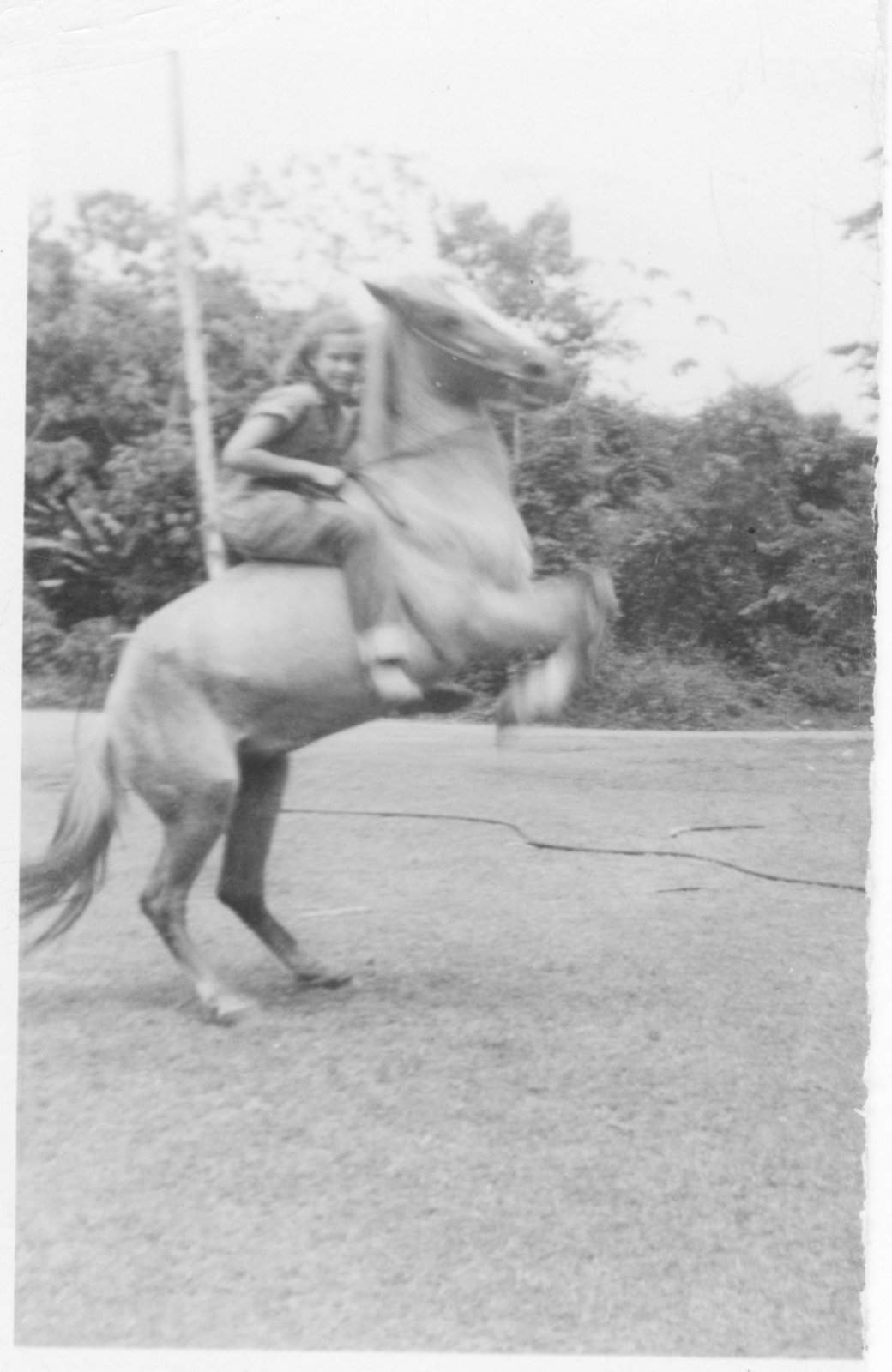 First-Horse.