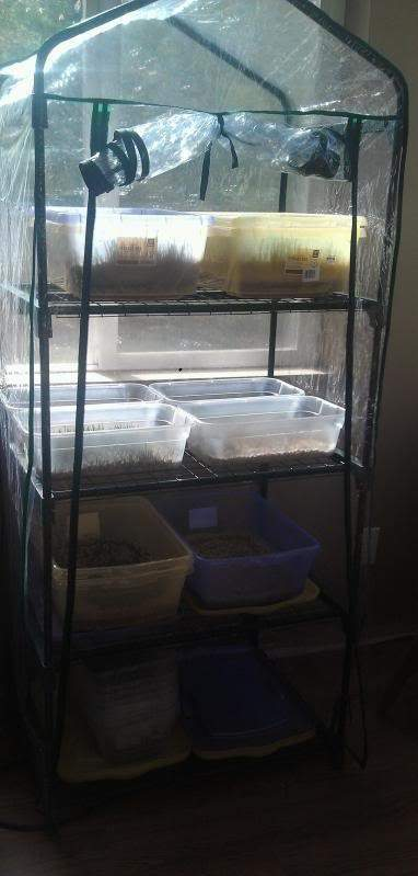 fodder greenhouse.