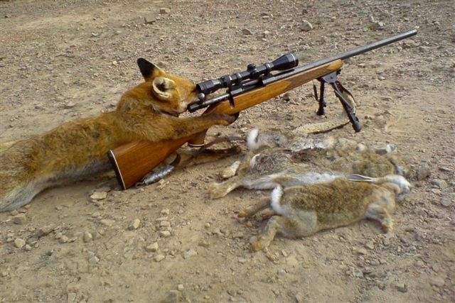 fox hunting.