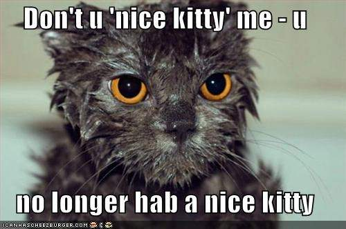 funny-pictures-wet-kitty-is-no-longer-nice1.