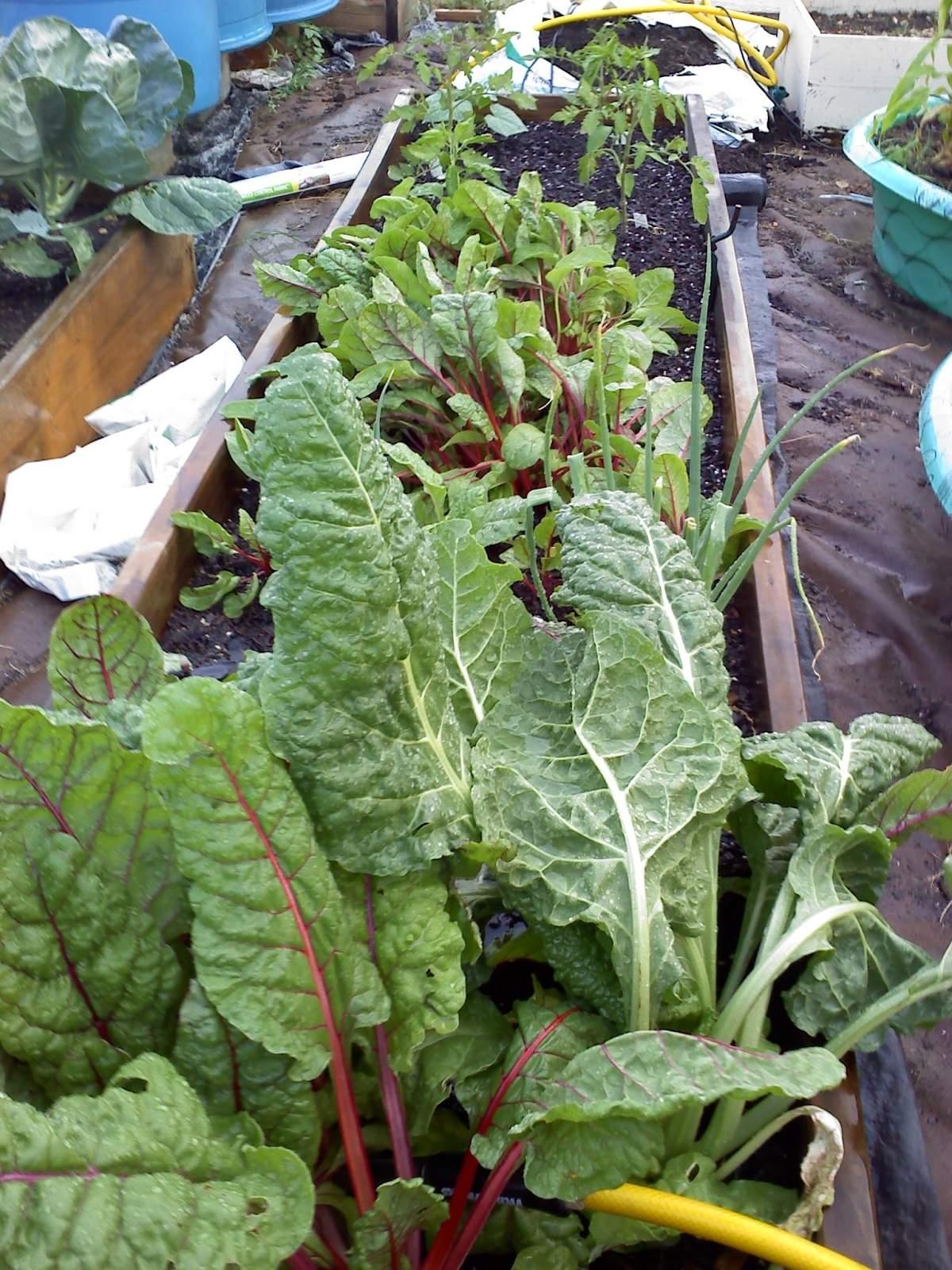 Garden 0501011906.