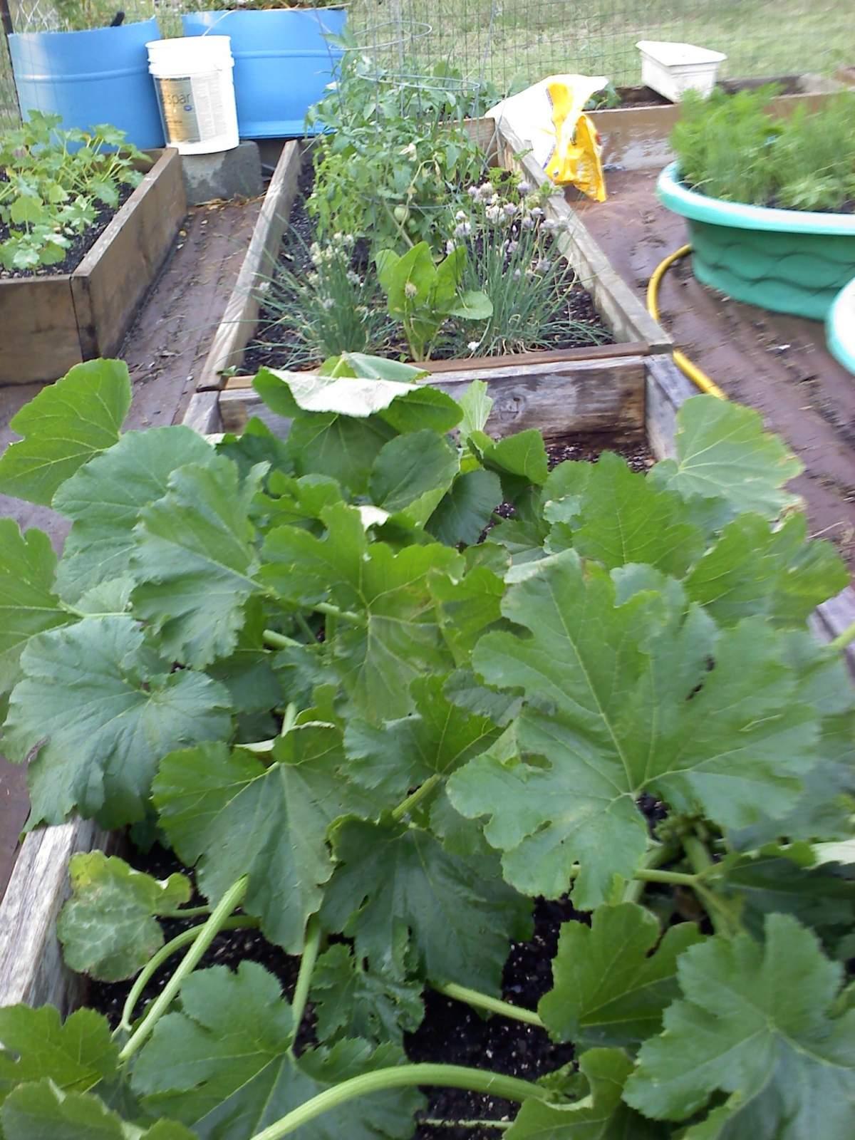 garden 0501011909a.