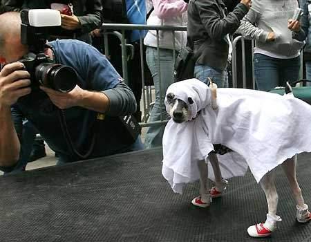 ghostdog.