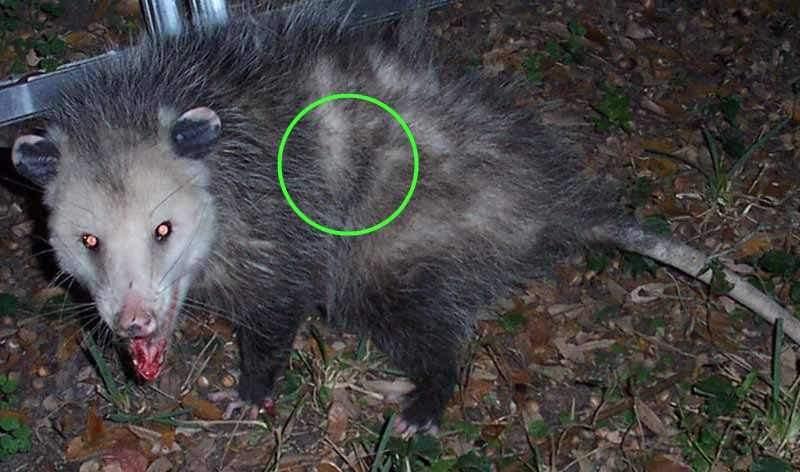 green laser.