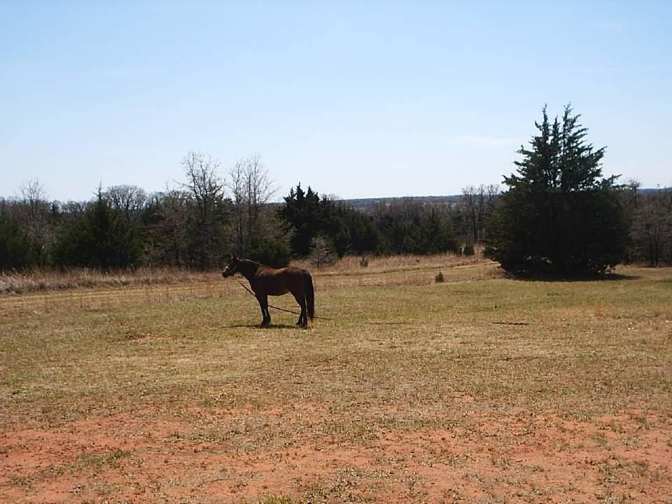 Horses 011.
