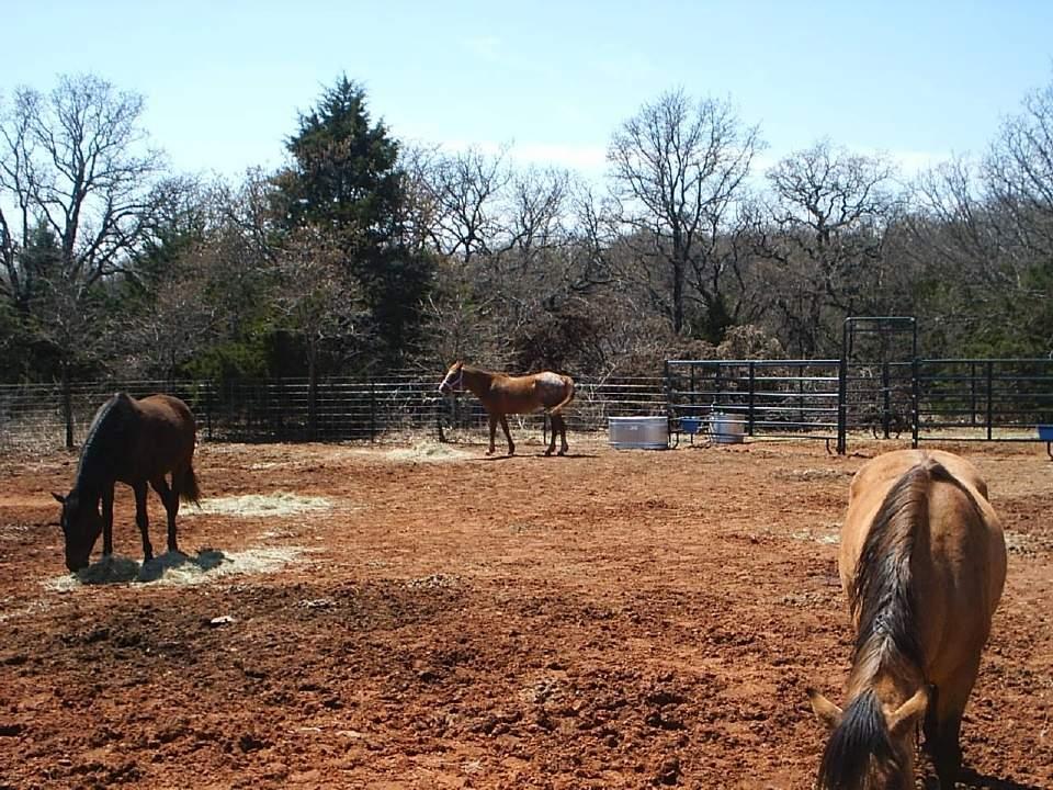 Horses 015.