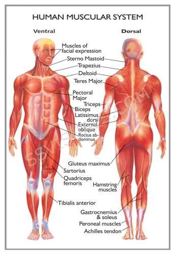 human20anatomy20diagram203.