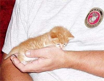 kitten1.