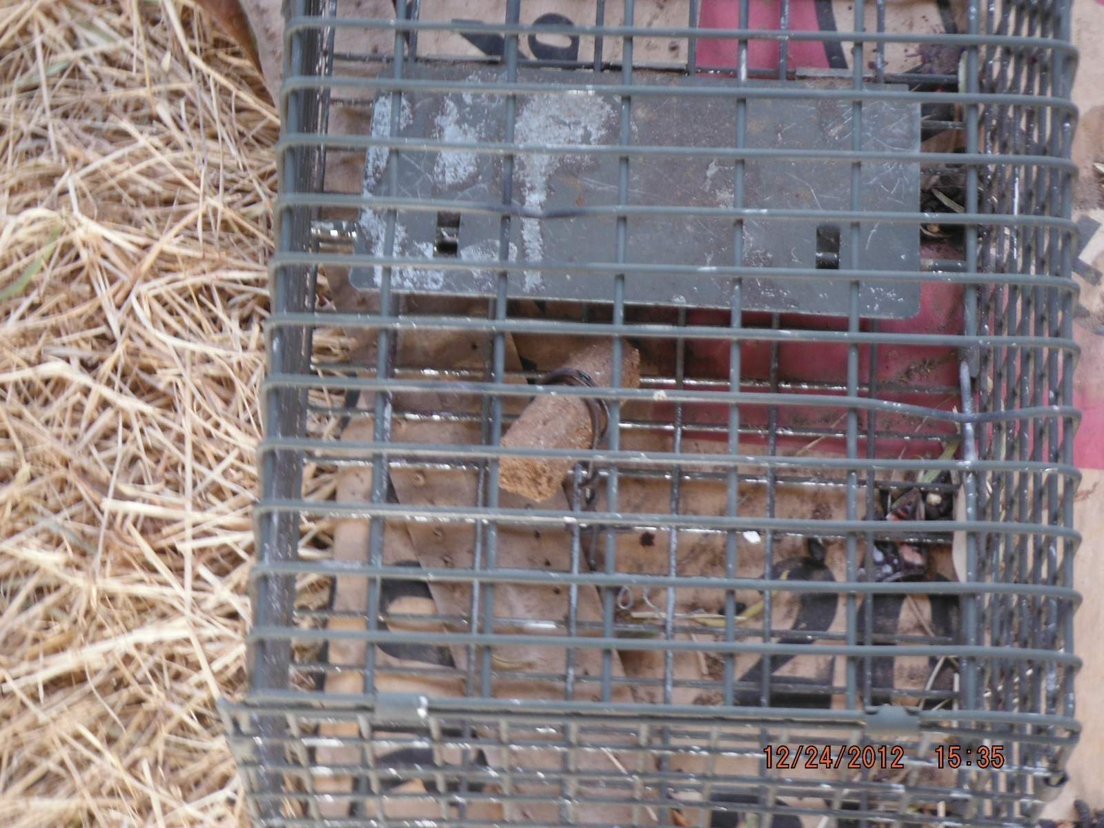 Live Trap- Small and Bait tied to bottom.JPG