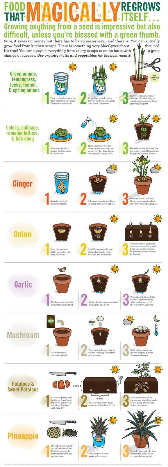 magically regrowing food.