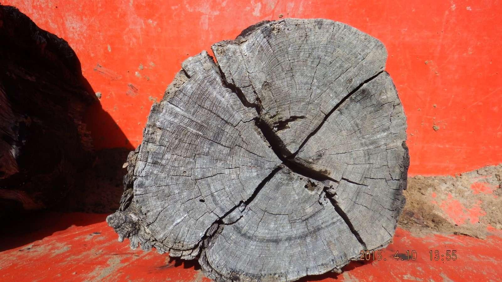 Mesquite Log in the Bucket 2.JPG
