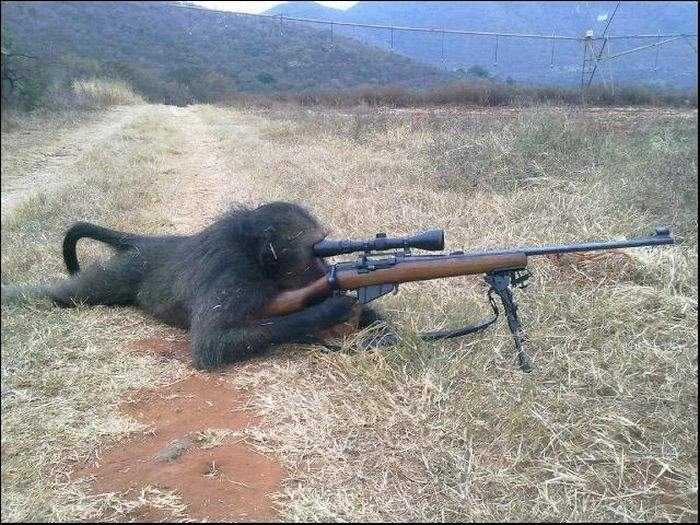 monkey-shooting-gun.