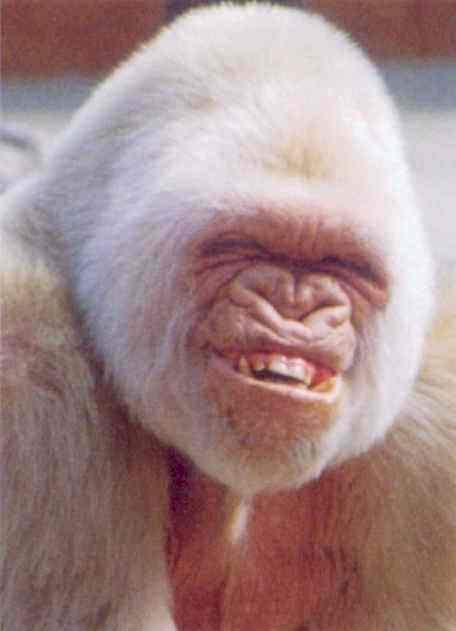monkey_smile.