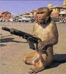 monkey_with_a_gun.