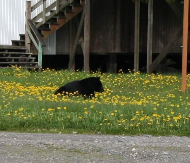 Mr. Bear.
