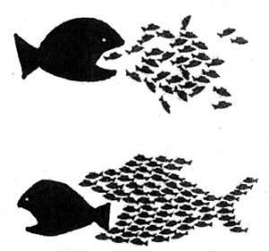 organize-fish-3-300x281.