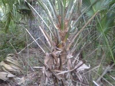 palm1.
