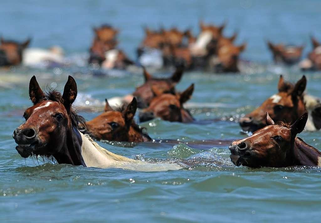 saltwater-cowboy-jumbo.