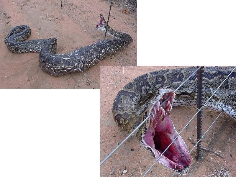 snake_505.