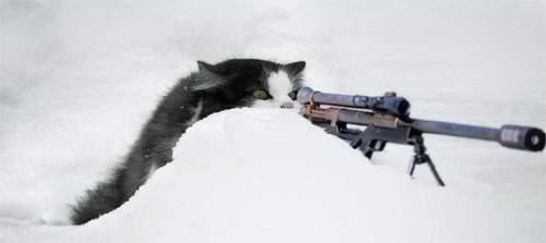 sniper cat.