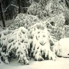 Snow_224.