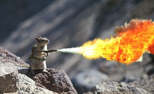 SquirrelFlameThrower.