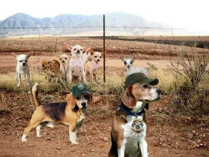 us border patrol.
